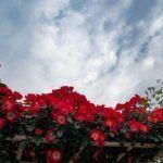 Сэм на отдыхе — Хидео Кодзима показал новый кадр из Death Stranding