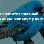 В Twitter появится платный доступ к эксклюзивному контенту